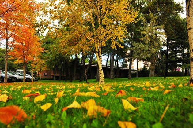 Dünyanın dört bir yandaki fotoğrafçıların kadrajından rengarenk sonbahar fotoğrafları.