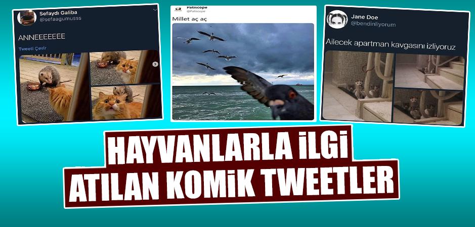 Hayvanlarla İlgili Atılan Komik Tweetler