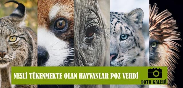 Nesli Tükenmekte Olan Hayvanlar Poz Verdi