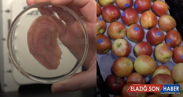 Elma Diliminden 'Yapay Kulak'