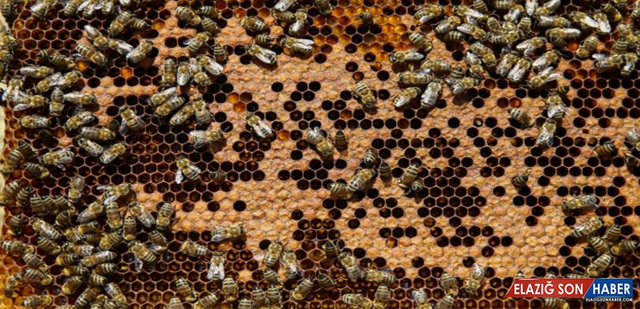 Aşırı soğuklar nedeniyle çok sayıda arı telef oldu