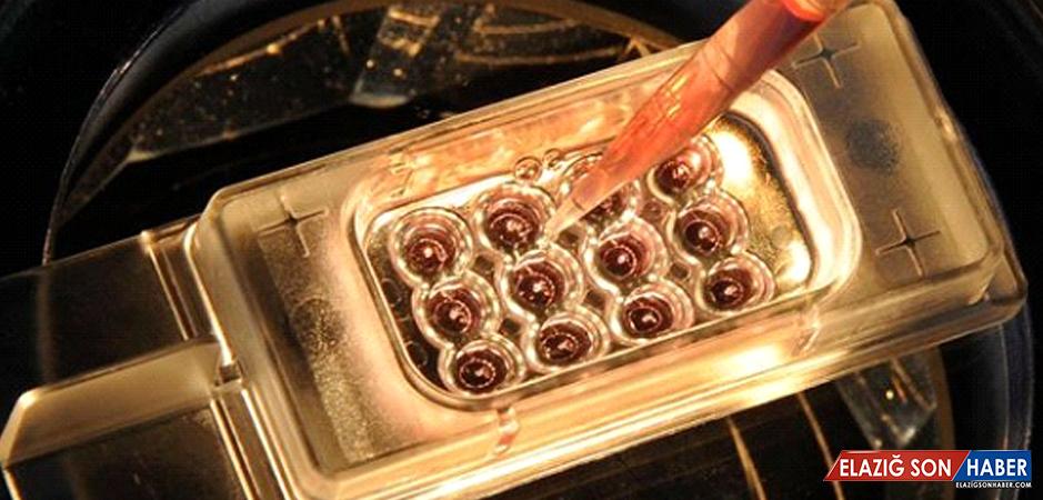 İnsan Yumurtası İlk Kez Dışında İncelendi