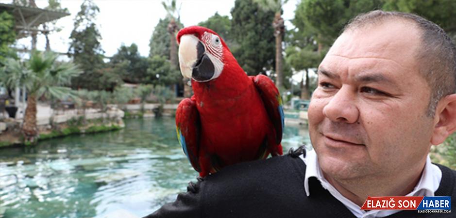 """Papağan """"Sultan"""" İle Sahibinin ilginç Dostluğu"""