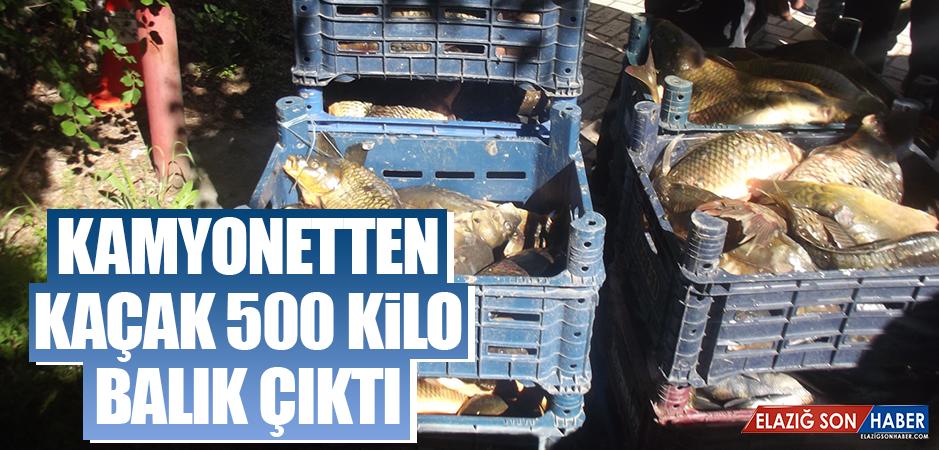 Kaçak Avlanan 500 Kilo Balık Ele Geçirildi