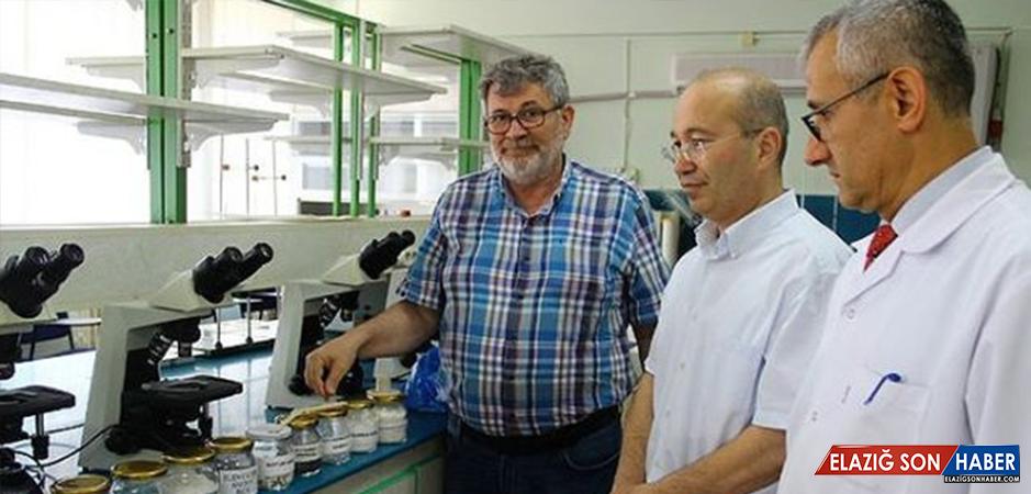 Türk Bilim İnsanları, Bor Kullanarak Plastiği Çeliğe Dönüştürdü