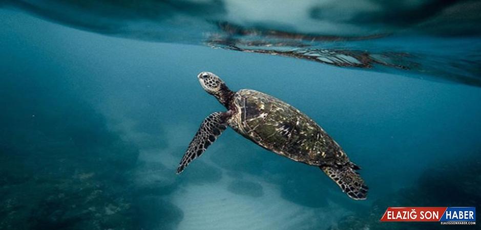 Meksika'da Yeni Bir Kaplumbağa Türü Keşfedildi
