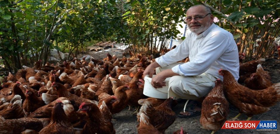 7 Yıl Önce 60 Tavukla İşe Başlayan Tecrübesiz Adam, Büyük Başarı Yakaladı