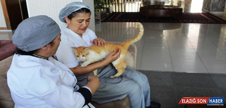 Balıkesir'in Uygulama Oteli İle Sokak Hayvanlarına Kucak Açılıyor