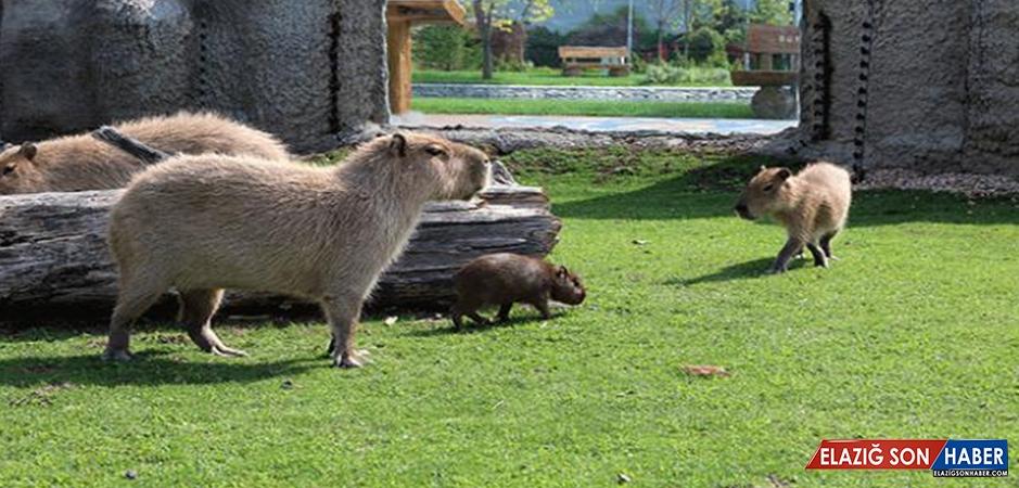 Eskişehir Hayvanat Bahçesi'nde 4 Sevimli Yavru