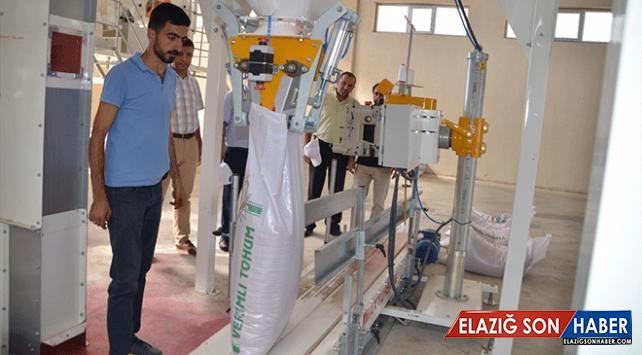 Devlet desteğiyle kurduğu fabrikada tohum işliyor