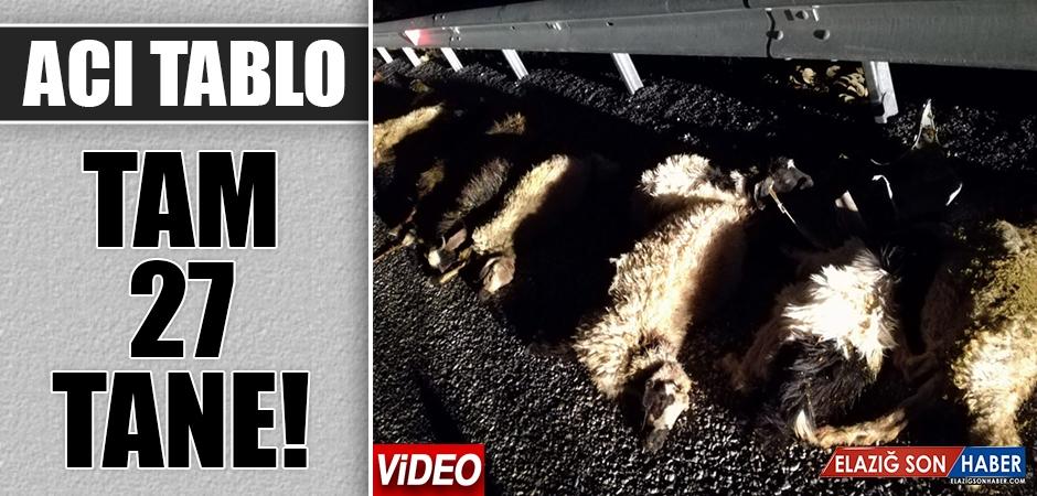 Elazığ'da Kaza Nedeniyle 27 Küçükbaş Hayvan Telef Oldu