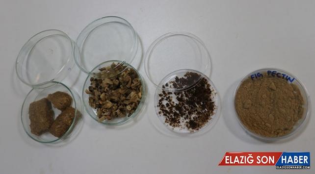 Kuru incir kozmetik, ilaç ve gıda endüstrisinde kullanılabilecek