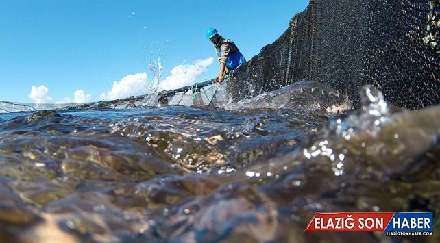 Rusya'ya balık ihracatında hedef 100 milyon dolar