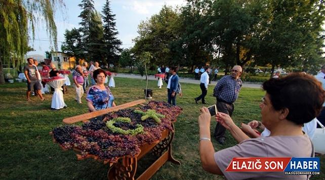 Trakya Bağ Bozumu ve Ekoloji Festivali'nde 90 çeşit üzüm sunuldu