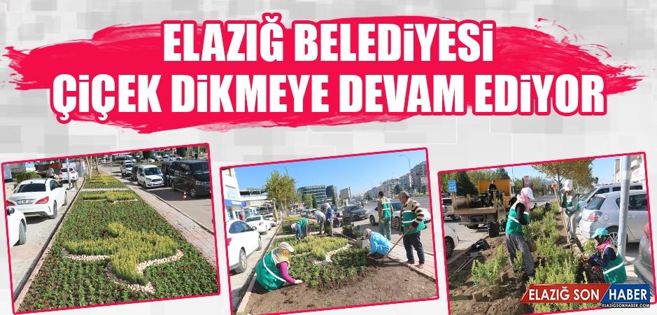 Elazığ Belediyesi Çiçek Dikmeye Devam Ediyor