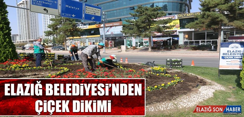 Elazığ Belediyesi'nden Çiçek Ekimi