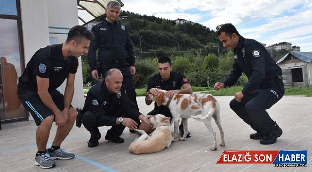 Garip ve Haydut isimli köpekler deniz polisinin maskotu oldu