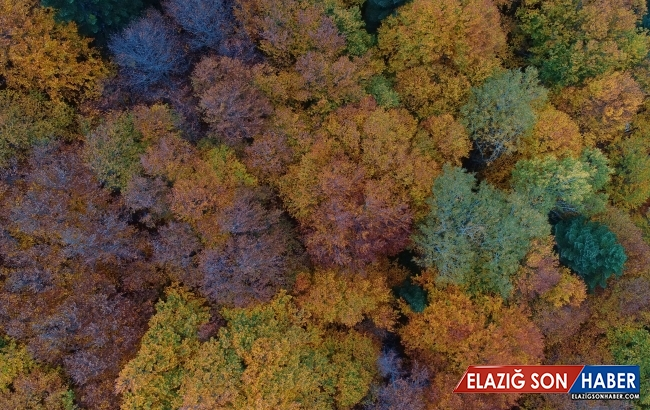Sonbahar Uludağ'ı Rengarenk Ağaçlarla Süsledi