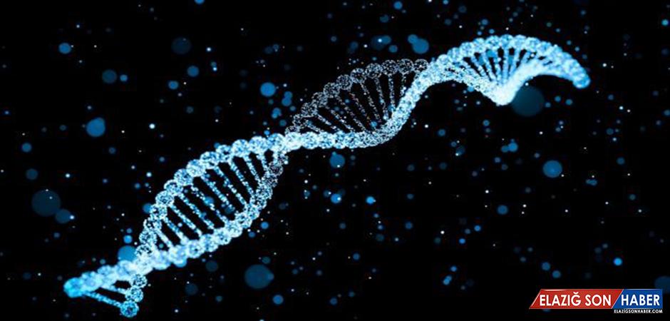 Araştırmacılar, Hastadan Elde Edilen Hücrelerle Kişiselleştirilmiş Doku Üretti