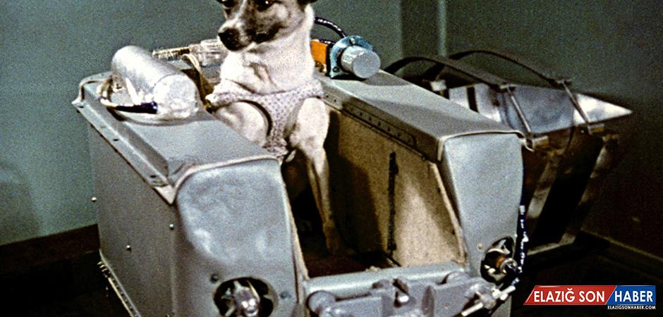 Sputnik 2 Uydusuyla Uzaya Çıkan İlk Canlı: Layka