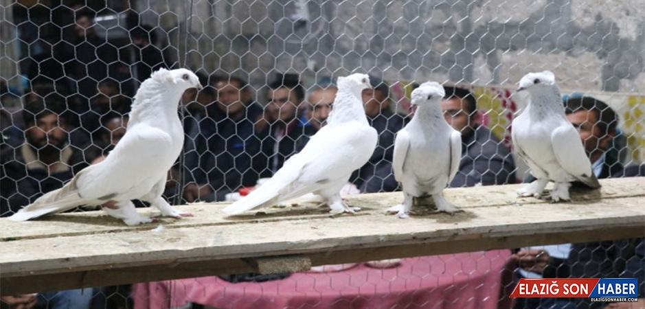 Türkiye'nin Dört Bir Yanından Gelip Araba Fiyatına Güvercin Alıyorlar