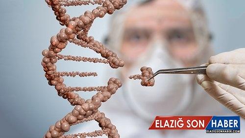Bilim İnsanları, CRISPR Kullanarak Kök Hücreleri Görünmez Hale Getirdi