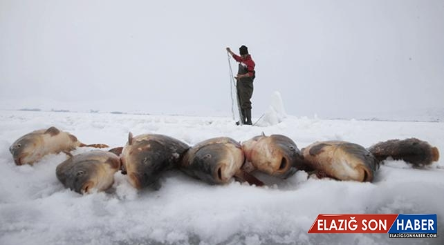 Ekmeklerini buzdan çıkarıyorlar