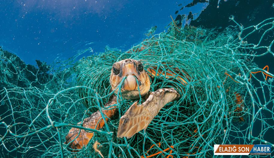 Denizlerdeki Plastik Artışı, 60 Senelik Verilerce Onaylandı
