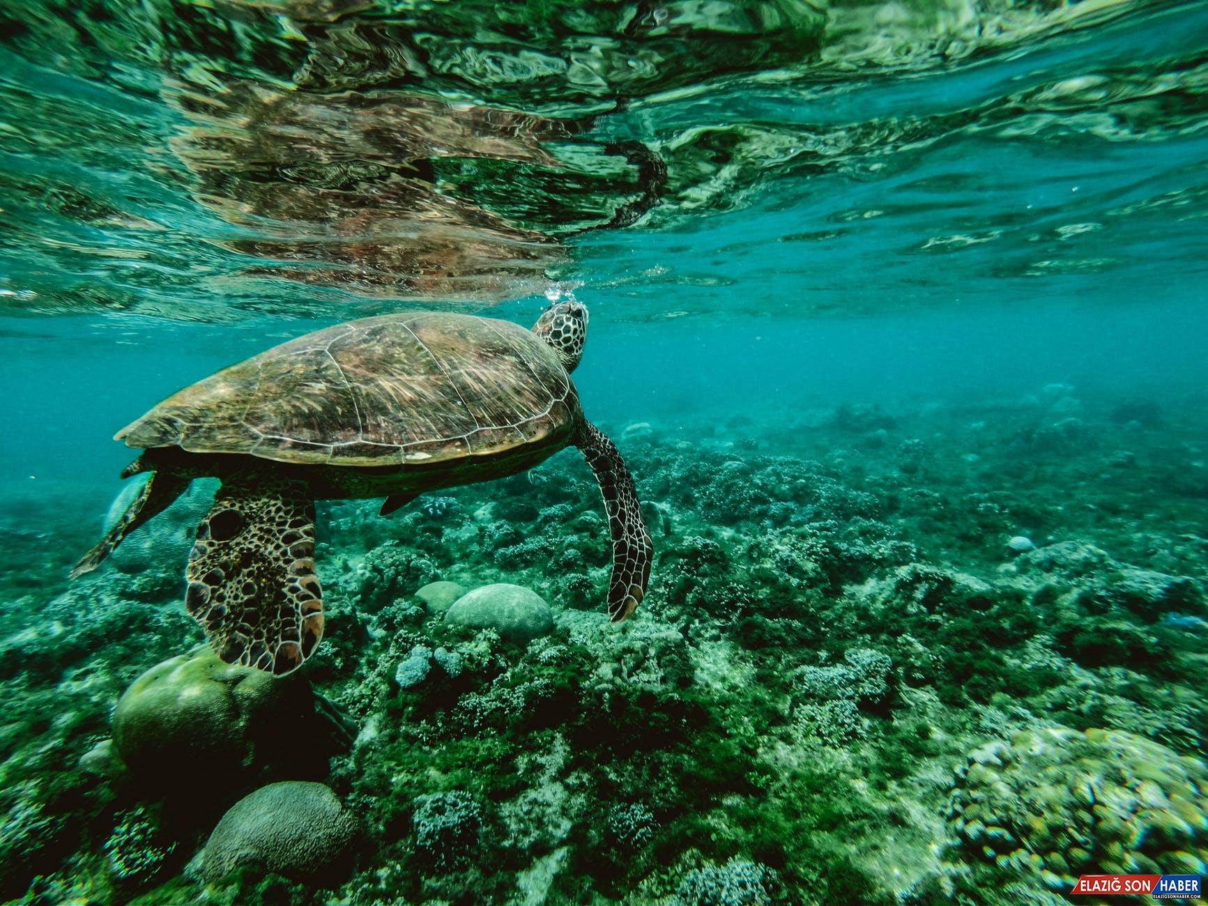 BM'nin Araştırmasına Göre İnsanlar, Doğaya 'Eşsiz' Bir Şekilde Zarar Veriyor