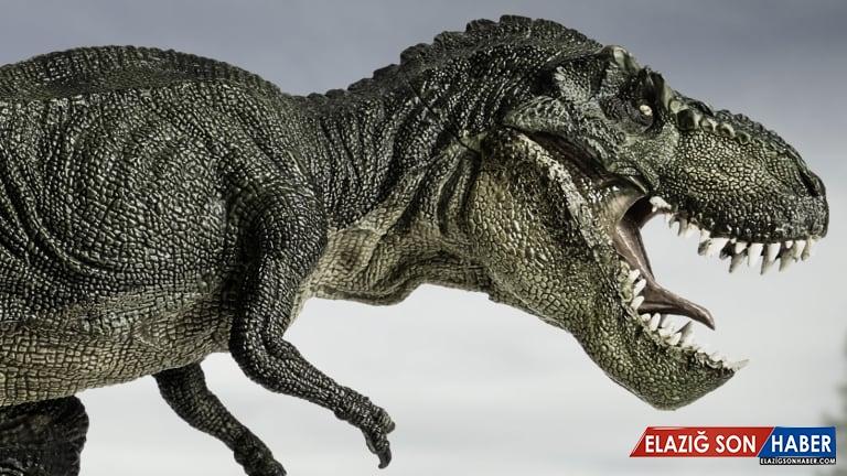 Devasa T-Rex'in Atalarının Kendinden Daha Küçük Tiranozorlar Olduğu Ortaya Çıktı