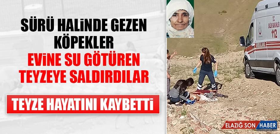 Elazığ'da Köpek Saldırısına Uğrayan Kadın Hayatını Kaybetti