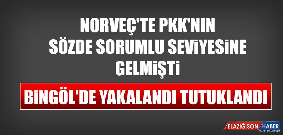 Norveç'te PKK'nın Sözde Sorumlu Seviyesine Gelmişti