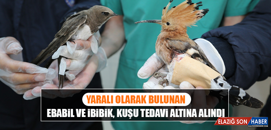 Yaralı Olarak Bulunan Ebabil ve İbibik, Kuşu Tedavi Altına Alındı