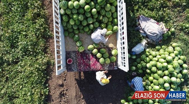 Diyarbakır'da karpuz rekoltesinde yüzde 43 artış