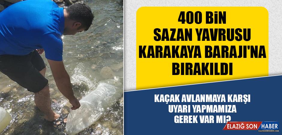 400 Bin Sazan Yavrusu Karakaya Barajı'na Bırakıldı