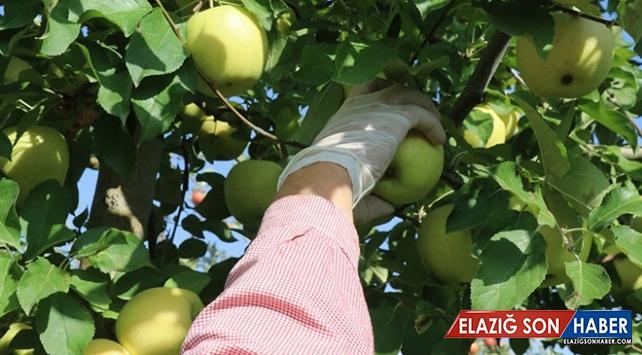 Doğu'nun organik meyveleri Avrupa pazarında