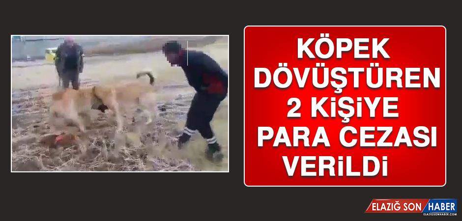 Köpek Dövüştüren 2 Kişiye Para Cezası Verildi
