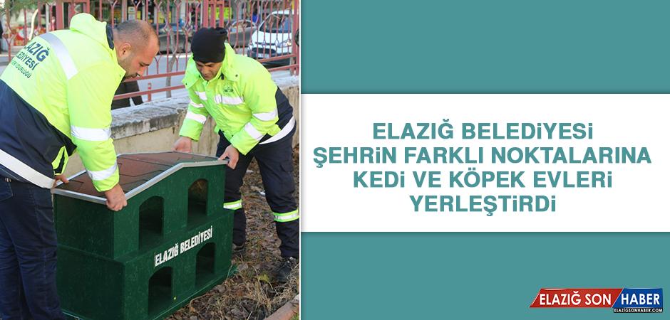 Elazığ Belediyesi Şehrin Farklı Noktalarına Kedi ve Köpek Evleri Yerleştirdi