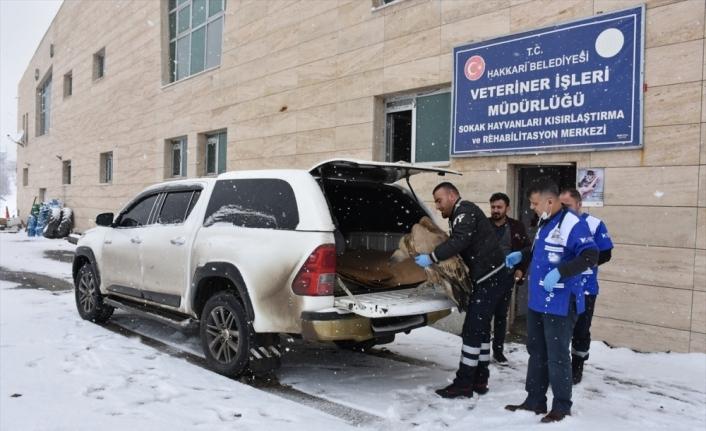 Hakkari'de bitkin halde bulunan kızıl akbaba tedavi altına alındı
