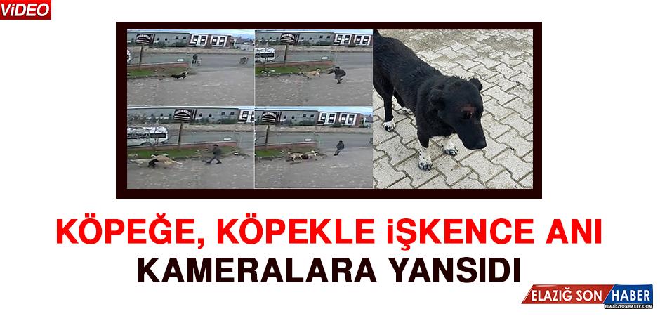 Köpeğe, Köpekle İşkence Anı Kameralara Yansıdı