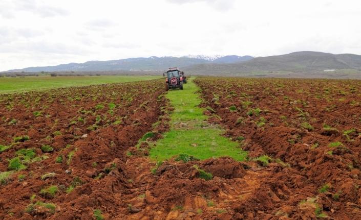 Bingöl'de çiftçilere yüzde 75 hibeyle verilen tohumlar toprakla buluştu