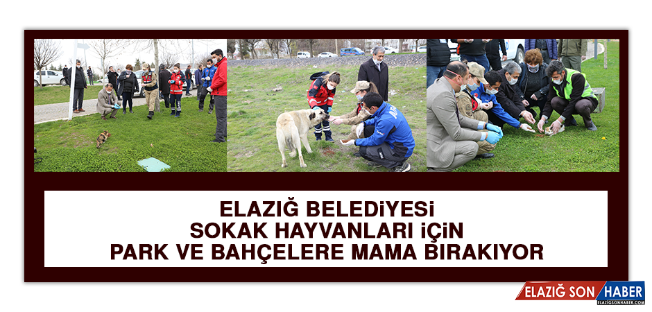 Elazığ Belediyesi Sokak Hayvanları İçin Park Ve Bahçelere Mama Bırakıyor