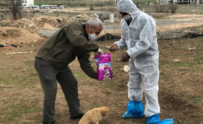 Elazığ Valiliğinden sokak hayvanlarına yem ve mama desteği