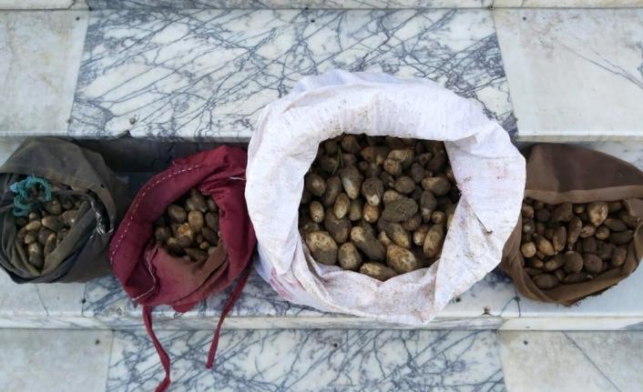 Elazığ'da kaçak salep soğanı toplayan 4 kişiye 307 bin 588 lira ceza