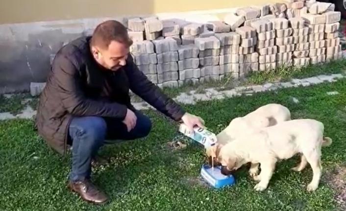 Karakoçan Belediyesinden sokak hayvanlarına süt ve mama takviyesi