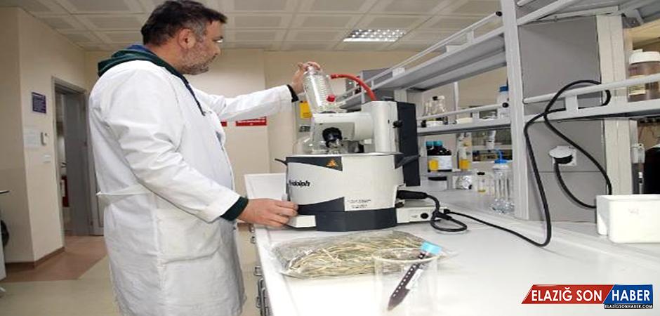 'Zeytin ağacı yaprağı, bağışıklık sistemini güçlendirir'