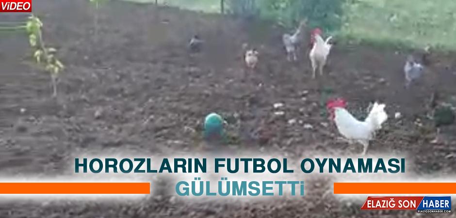 Elazığ'da Horozların Futbol Oynaması Gülümsetti