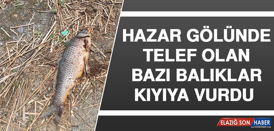 Hazar Gölünde Telef Olan Bazı Balıklar Kıyıya Vurdu