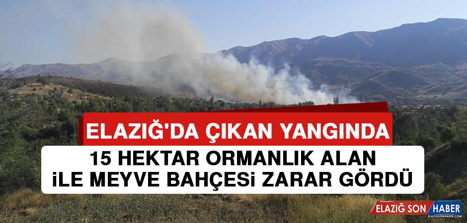Elazığ'da Çıkan Yangında 15 Hektar Ormanlık Alan İle Meyve Bahçesi Zarar Gördü