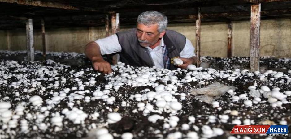 Türkiye'nin Mantar Üretiminin Yüzde 30'unu Karşılıyor